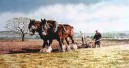 The Plough Horses